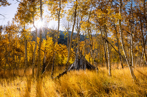 インヨー国有林「June Lake in autumn, Inyo National Forest, California, America, USA」:スマホ壁紙(14)