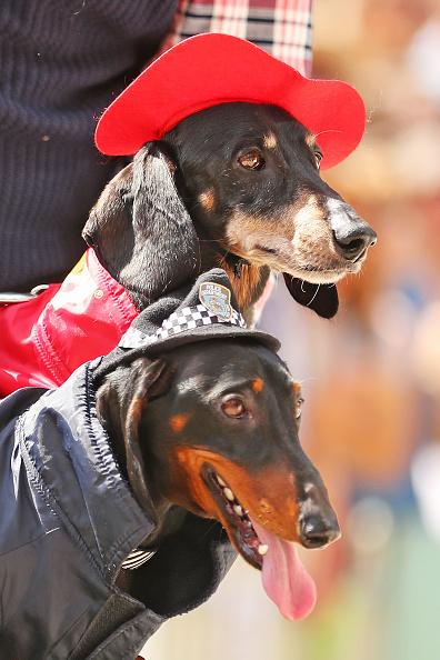 Soccer「Annual Dachshund Race Celebrates Start Of Oktoberfest In Australia」:写真・画像(6)[壁紙.com]