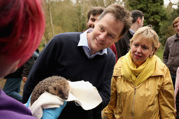 ハリネズミ「Nick Clegg Visiting The Parkridge Wildlife Centre On The Campaign Trail」:写真・画像(4)[壁紙.com]