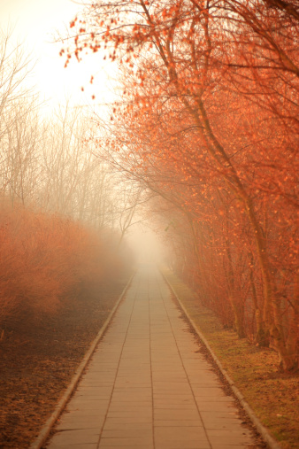 Sepia Toned「Misty Path」:スマホ壁紙(13)
