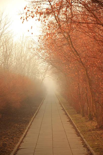 Misty Path:スマホ壁紙(壁紙.com)