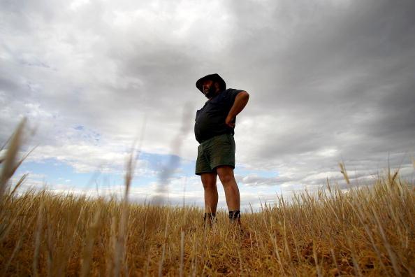 Barley「Australia Endures The Worst Drought On Record」:写真・画像(0)[壁紙.com]