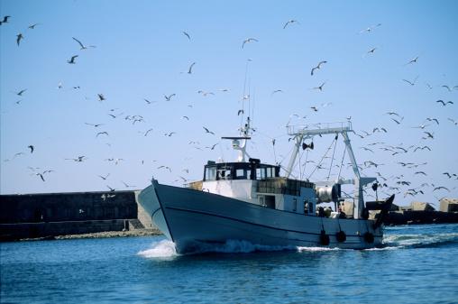 Seagull「Sete trawler returning to port」:スマホ壁紙(11)