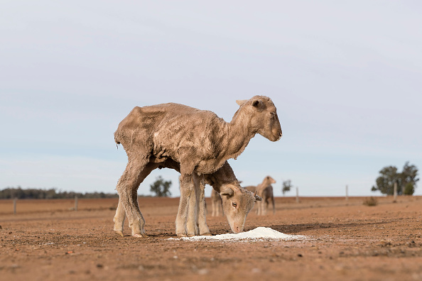 オーストラリア「New South Wales Farmers Battle Crippling Drought」:写真・画像(9)[壁紙.com]