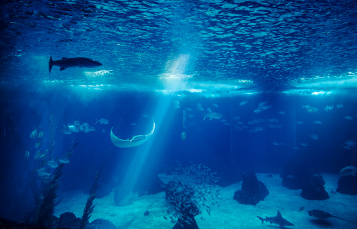 Large「Fish in a big blue aquarium」:スマホ壁紙(0)