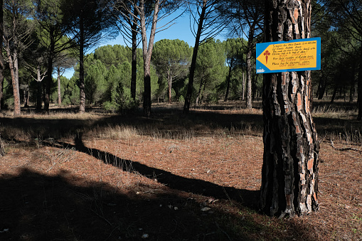 Camino De Santiago「Signposting of the Way to Santiago de Madrid as it passes through the province of Valladolid in which it is requested to keep the Way clean. Pine forests of Valladolid. Castile and Leon. Spain」:スマホ壁紙(14)