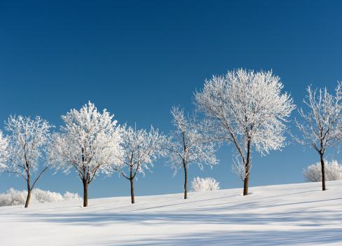 雪「冷たいの木々の下で、冬の日」:スマホ壁紙(12)