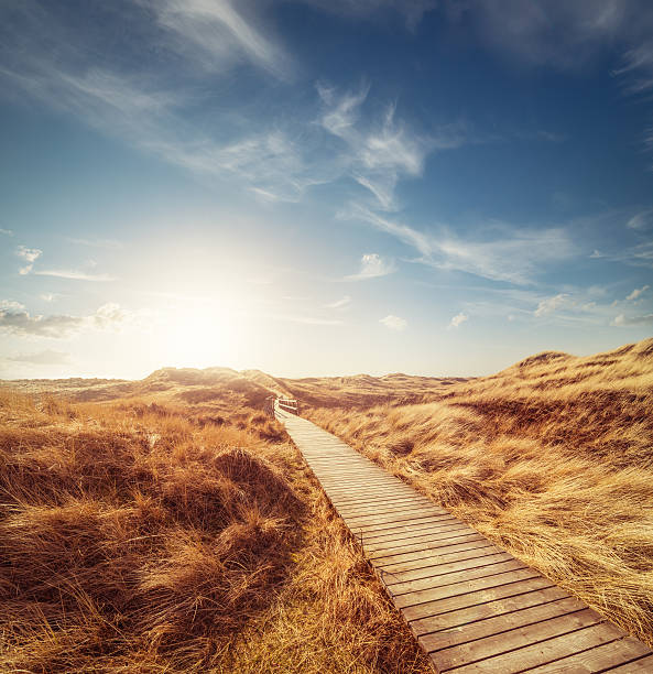 Way through the dunes:スマホ壁紙(壁紙.com)