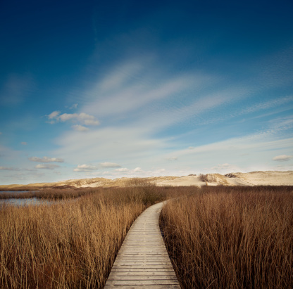 Footpath「Way through the dunes」:スマホ壁紙(3)
