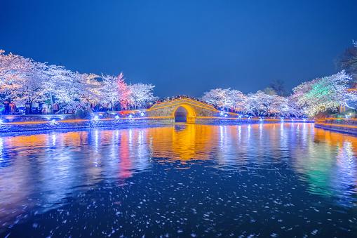 夜桜「Turtle Head Islet to enjoy the night view of cherry blossoms,Wuxi,Jiangsu Province,China」:スマホ壁紙(10)