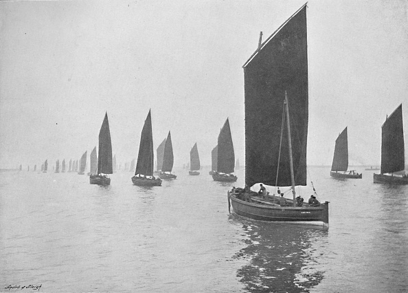 Animal Wildlife「Herring Boats Off The Tyne」:写真・画像(11)[壁紙.com]