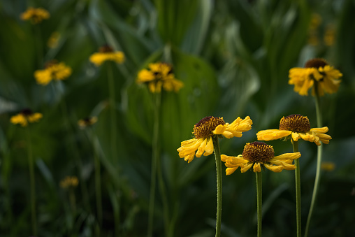 Corn Lilly「Asters and corn lilies at Summit Meadow」:スマホ壁紙(18)