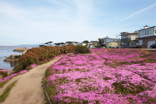 Monterey Bay「Pathway along flowery coastal trail」:スマホ壁紙(13)