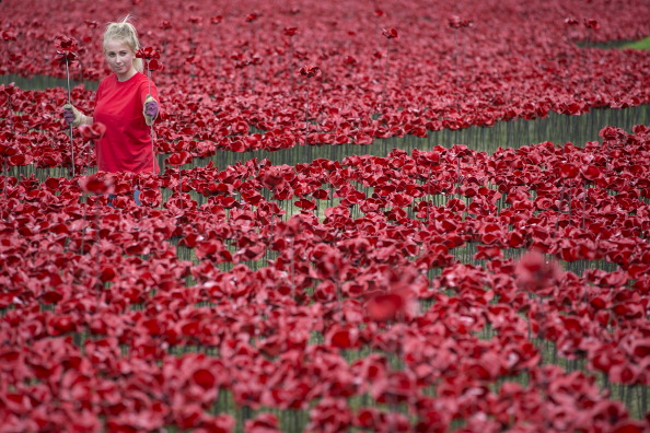 Volunteer「Volunteers Continue To Plant Ceramic Poppies At Tower Of London」:写真・画像(5)[壁紙.com]