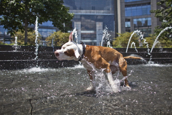熱さ「Heat Wave Brings Temperatures Into Upper 90's In New York City」:写真・画像(10)[壁紙.com]