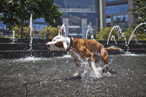 Heat - Temperature「Heat Wave Brings Temperatures Into Upper 90's In New York City」:写真・画像(5)[壁紙.com]