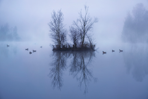 North Brabant「Misty lake with Canada Geese at dawn」:スマホ壁紙(1)