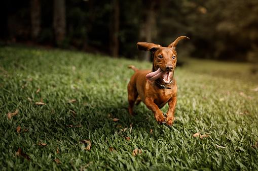 Pets「Cute dog running outside」:スマホ壁紙(12)