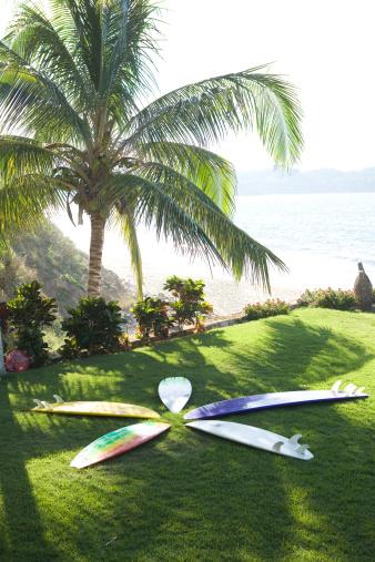 Sayulita「Arranged surfboards on lawn under palm tree」:スマホ壁紙(5)