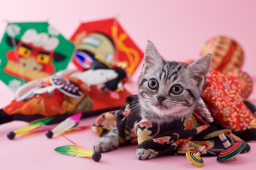 Kimono「American Shorthair Kitten and Japanese New Year Celebration」:スマホ壁紙(8)