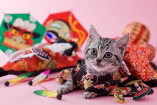 Kimono「American Shorthair Kitten and Japanese New Year Celebration」:スマホ壁紙(9)
