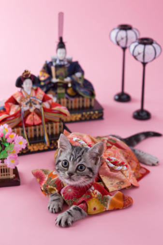 Hinamatsuri「American Shorthair Kitten and Hinamatsuri Doll」:スマホ壁紙(1)