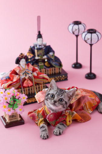 Hinamatsuri「American Shorthair Kitten and Hinamatsuri Doll」:スマホ壁紙(8)