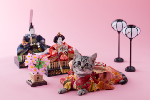 ひな祭り「American Shorthair Kitten and Hinamatsuri Doll」:スマホ壁紙(11)
