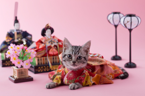 ひな祭り「American Shorthair Kitten and Hinamatsuri Doll」:スマホ壁紙(16)