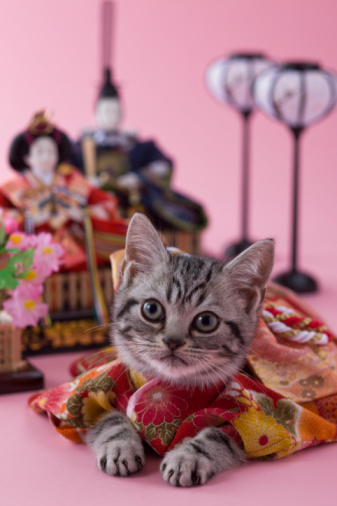 Hinamatsuri「American Shorthair Kitten and Hinamatsuri Doll」:スマホ壁紙(4)