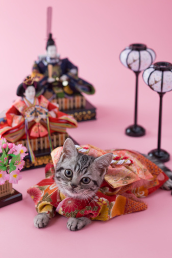 ひな祭り「American Shorthair Kitten and Hinamatsuri Doll」:スマホ壁紙(15)