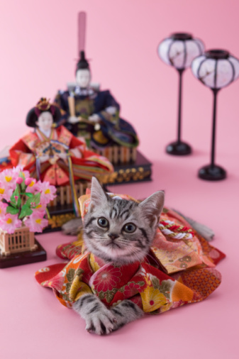 ひな祭り「American Shorthair Kitten and Hinamatsuri Doll」:スマホ壁紙(18)