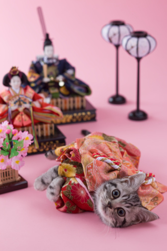 ひな祭り「American Shorthair Kitten and Hinamatsuri Doll」:スマホ壁紙(17)