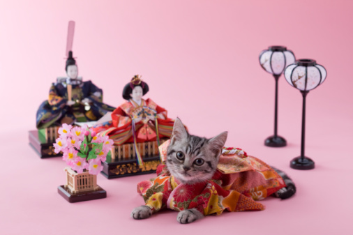 Hinamatsuri「American Shorthair Kitten and Hinamatsuri Doll」:スマホ壁紙(12)