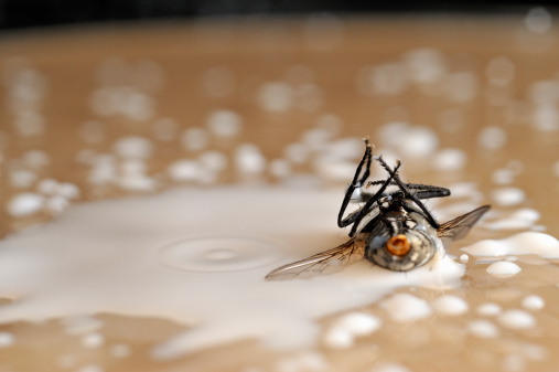 ガラス「Dead fly on milk drops」:スマホ壁紙(17)