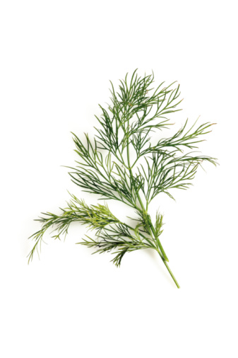 Dill「Dill (Anethum graveolens), elevated view」:スマホ壁紙(3)