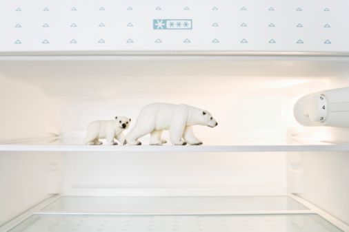 Animal Family「Toy Polar bears in freezer」:スマホ壁紙(15)