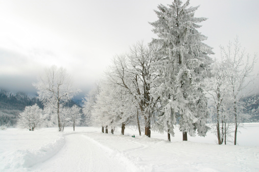 雪山「Frozen trees, Lake Bled, Slovenia.」:スマホ壁紙(12)