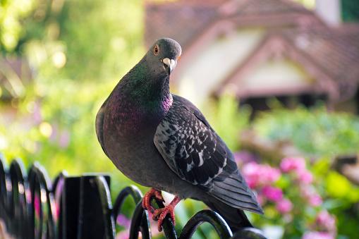Birds「ピジョンポーズをとる」:スマホ壁紙(18)