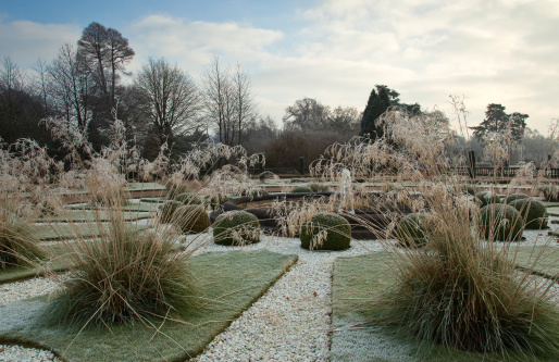 Frost「Frosted beds of grasses in formal garden」:スマホ壁紙(0)