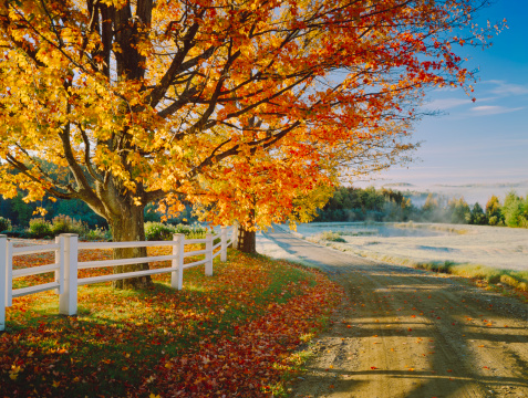 Maple「A lovely autumn foliage on a dirt road in Vermont」:スマホ壁紙(11)