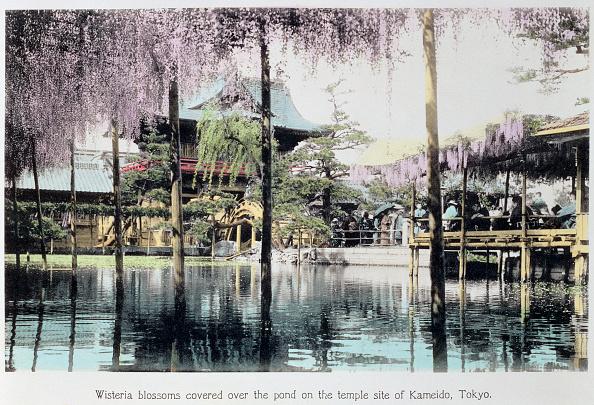 東京「Wisteria Blossom Over The Pond In The Kameido Temple Gardens Tokyo Japan Late 19th Century」:写真・画像(6)[壁紙.com]