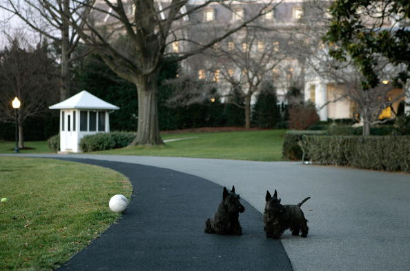 Joshua Roberts「President Bush's Dogs Play On The Driveway」:写真・画像(10)[壁紙.com]