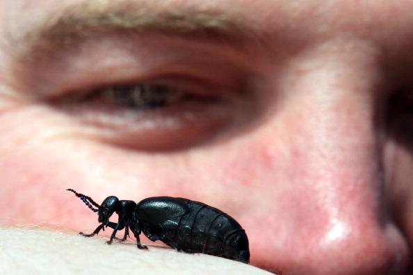 虫・昆虫「The National Trust Conduct Their Oil Beetle Survey」:写真・画像(15)[壁紙.com]