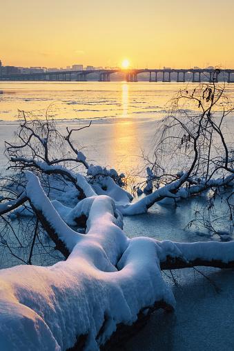Fallen Tree「Snow on fallen tree at sunset」:スマホ壁紙(1)