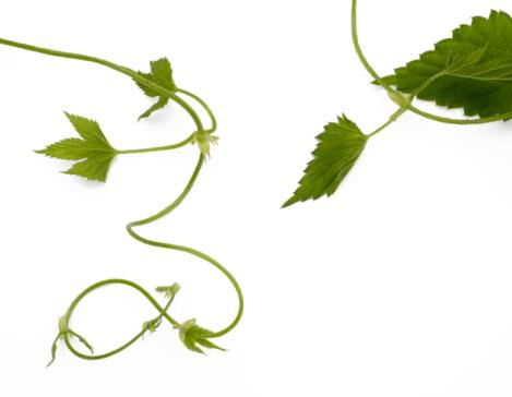 Floral Pattern「Natural stem swirls」:スマホ壁紙(5)