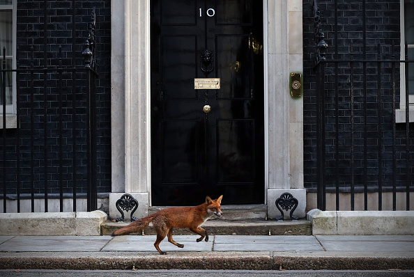 10 Downing Street「Downing Street On The Last Day Of Parliament Before The General Election」:写真・画像(16)[壁紙.com]