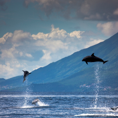 Atlantic Islands「Dolphins Jumping into the Air」:スマホ壁紙(4)