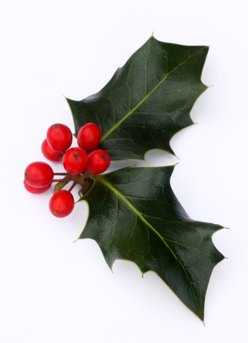 Holly「Holly leaves with a bunch of red berries.」:スマホ壁紙(18)