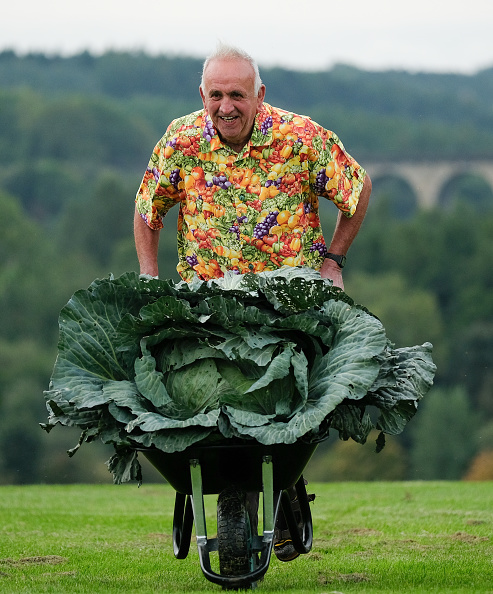 Cabbage「Entrants To The Harrogate Flower Show Giant Vegetable Competition Prepare Their Produce」:写真・画像(3)[壁紙.com]